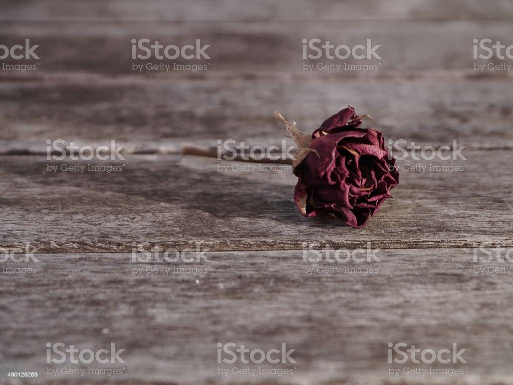 Rosenblüte Vertrocknete – Foto