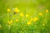 Verträumte Blumenwiese