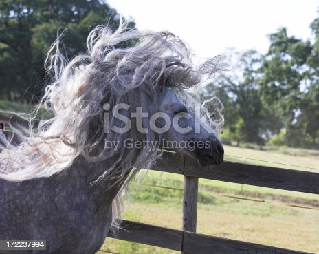 A horse having a very bad hair day.Half sillouetted with highlights.