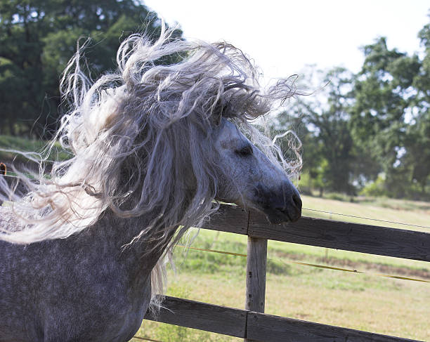 sehr schlechte haare tag - lustige pferde stock-fotos und bilder