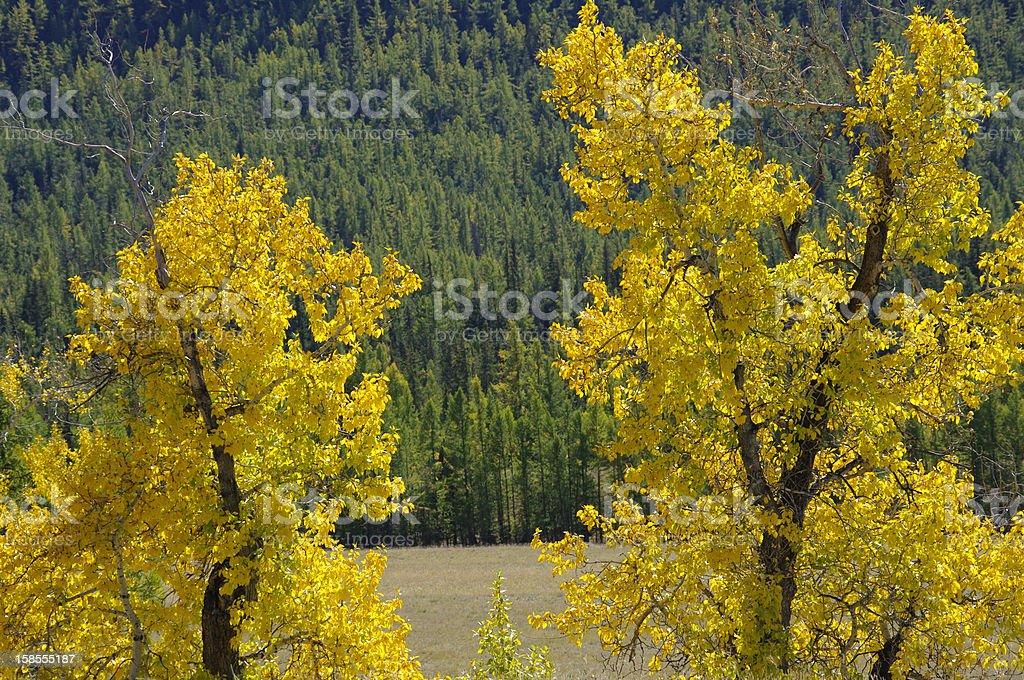 매우 아름다운 추절 나무. royalty-free 스톡 사진