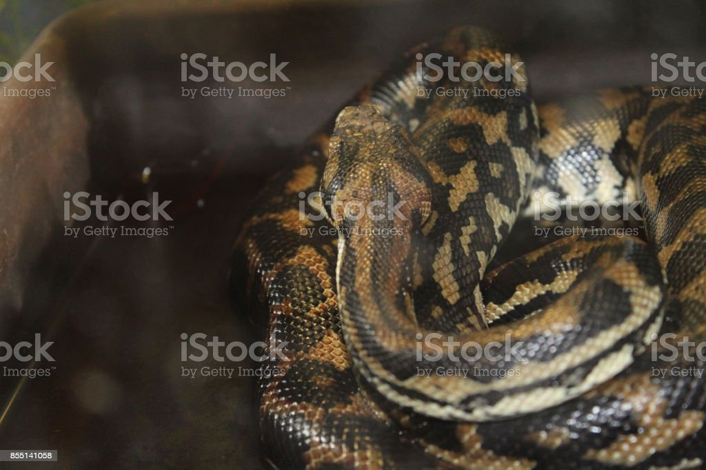 Very beautiful snake stock photo