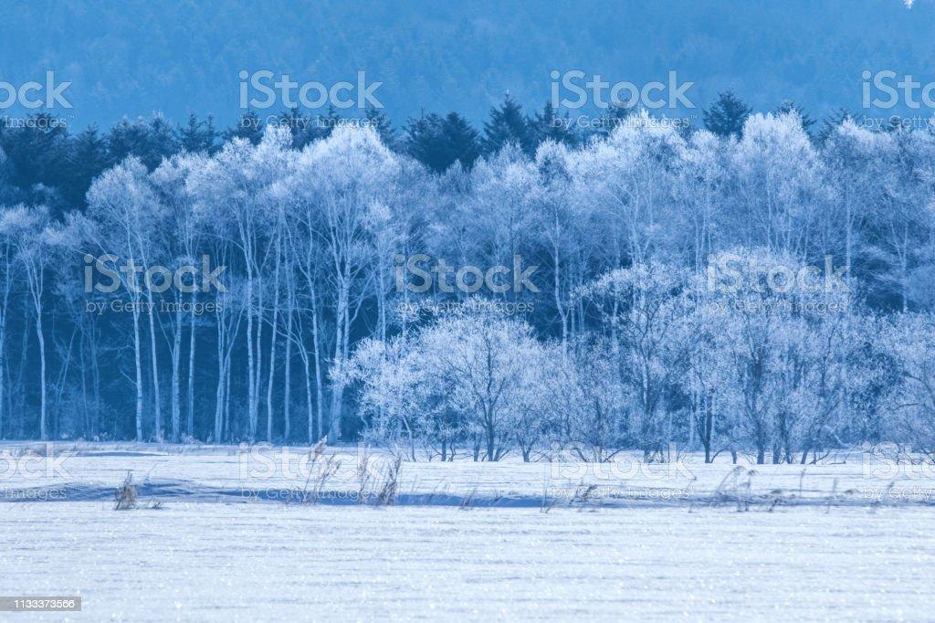 霜で完全に覆われた非常に美しい木 ストックフォト