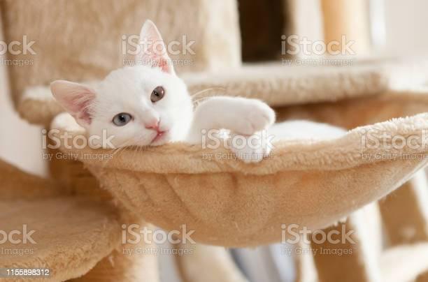 Very cute white young cat sitting in hammock paws out picture id1155898312?b=1&k=6&m=1155898312&s=612x612&h=b7q1td3s  zj45ovmisdic1yeyehzxl7rhs9bv75aro=