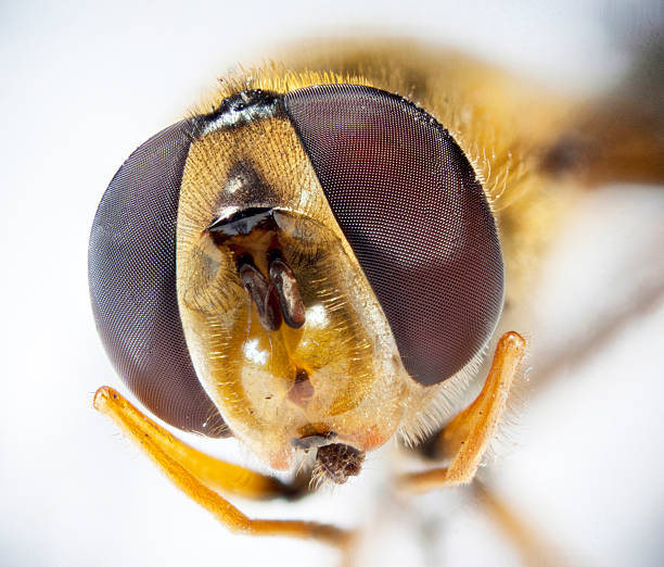 Very detailed macro portrait of bee Very detailed macro portrait of bee bee eyes stock pictures, royalty-free photos & images