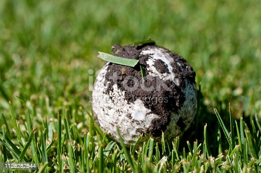 Golf ball that is covered with dirt and grass, possibly from being hit into the rough