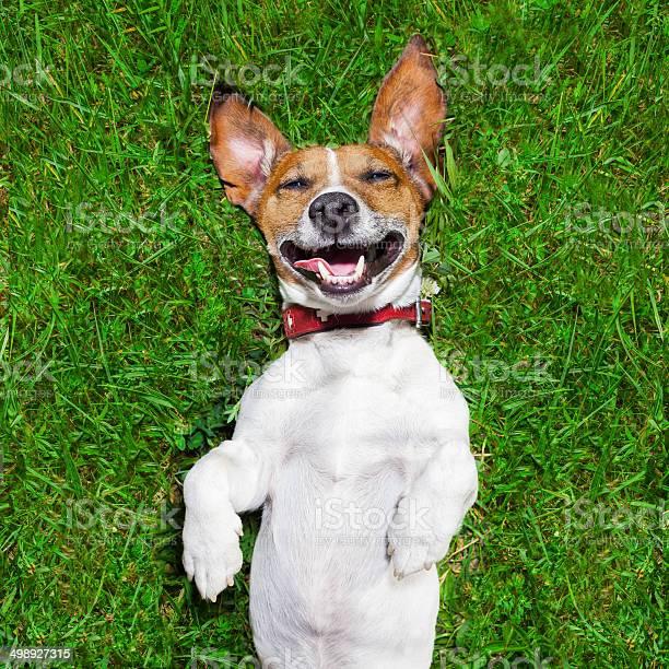 Very funny dog picture id498927315?b=1&k=6&m=498927315&s=612x612&h=klyjbbhjagcxv0vdn2l9pqb23g6 klhsxxlfea hqog=
