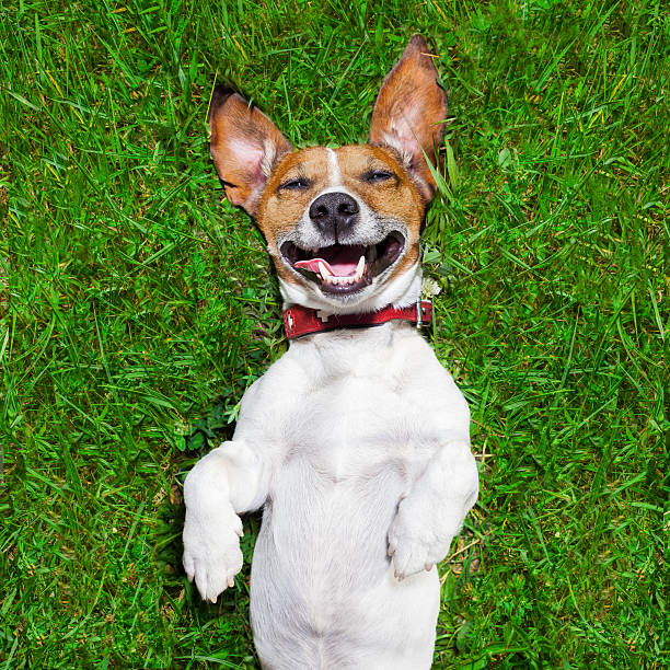 very funny dog stock photo