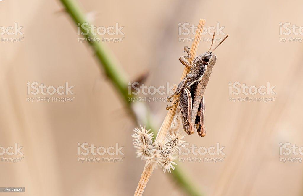 very little grasshopper stock photo