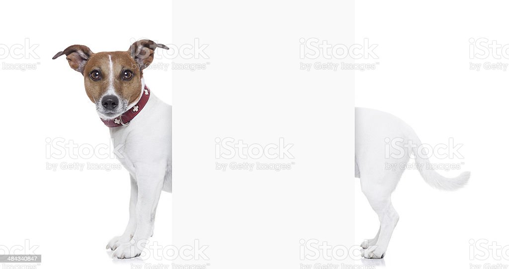 very long dog stock photo