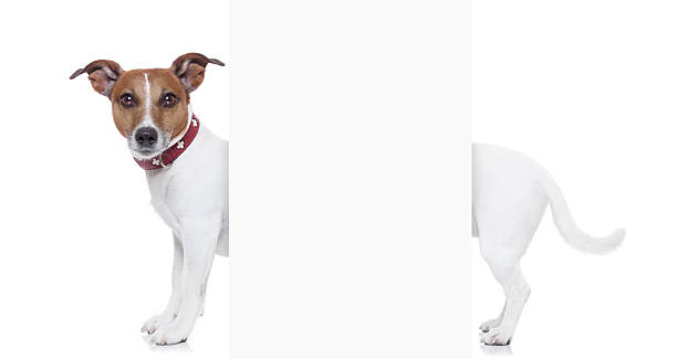 very long dog - tail stock photos and pictures
