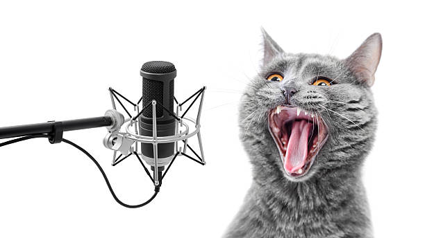 very loud singing cat - radio kultur stock-fotos und bilder