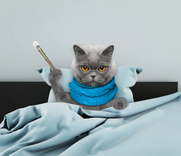 Very much sick cat in bed stock photo