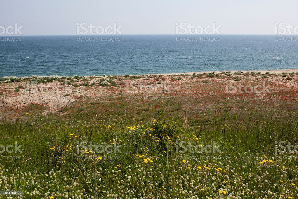 very nice beach with red poppy field royalty-free stock photo
