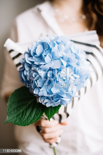 istock Very nice young woman holding a beautiful blossoming flower bouquet of fresh blue Hydrangea on the grey wall background 1132450086