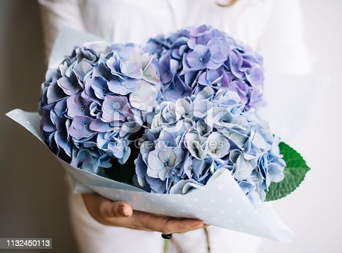istock Very nice young woman holding a beautiful blossoming flower bouquet of fresh blue Hydrangea on the grey wall background 1132450113