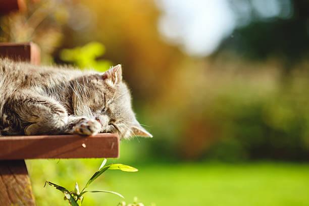 Very old cat sleeping stock photo