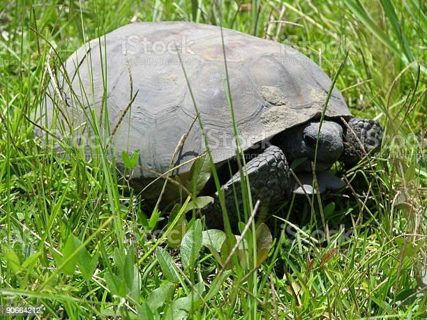 Very old wild turtle picture id90664212?b=1&k=6&m=90664212&s=612x612&h=7axtmbefbmjiuhmrsuowiodjn4t9mpucww4ree8bvsq=