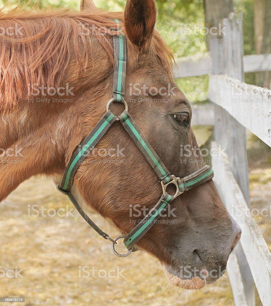 Very Sick Horse stock photo