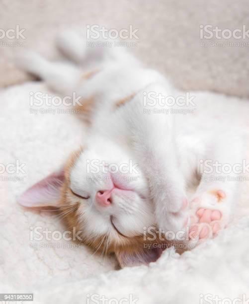 Very sleepy cute little kitten upside down in a basket picture id943198350?b=1&k=6&m=943198350&s=612x612&h=dllfqa2dki46bzynymd2kljooplq8kgju9czrz2nmls=