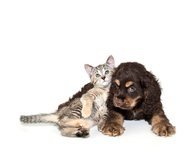 Very  Sweet Puppy and Kitten stock photo