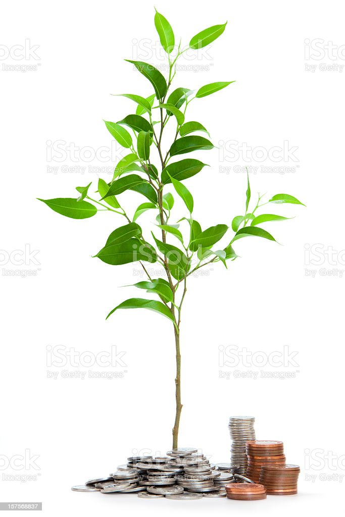 Very young tree isolated with coins royalty-free stock photo