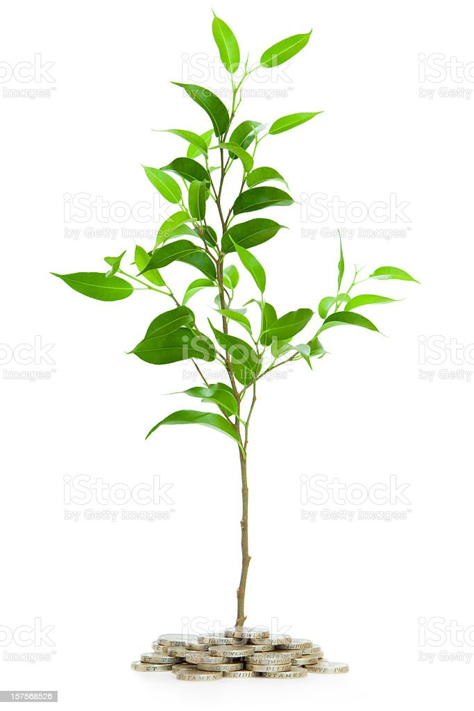 Very young tree isolated with pounds royalty-free stock photo