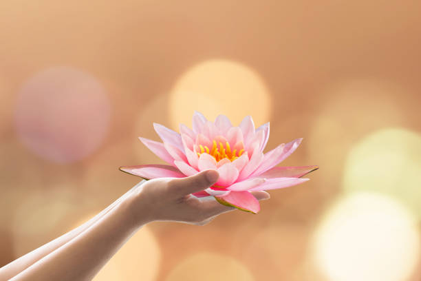 Vesak day, Buddhist lent day, Buddha's birthday worshiping concept with woman's hands holding water lilly or lotus flower stock photo
