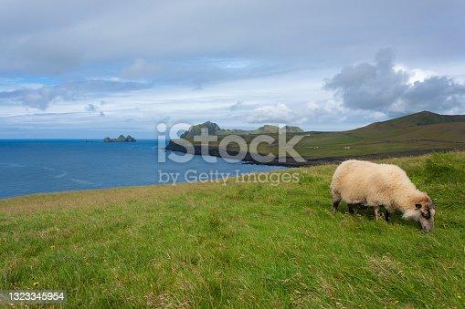 istock Vestmannaeyjar island beach day view, Iceland landscape. 1323345954