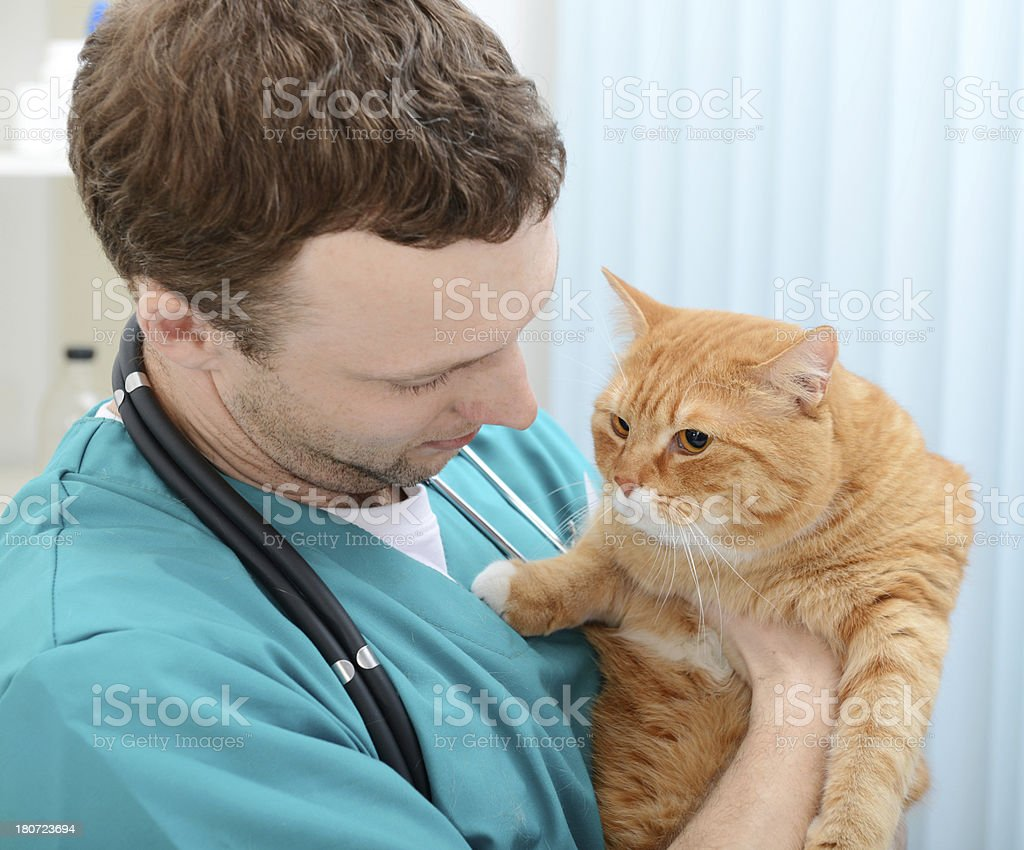 vet and cat royalty-free stock photo