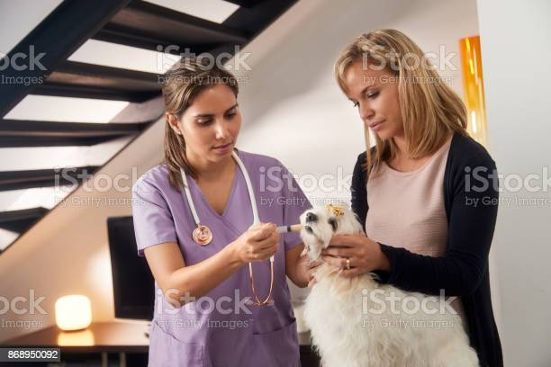 Vet and dog owner giving medicine drug to dog picture id868950092?b=1&k=6&m=868950092&s=612x612&h=vkqts14muhvbwsidbj  o5rmtua6fuubmgd2n naspq=