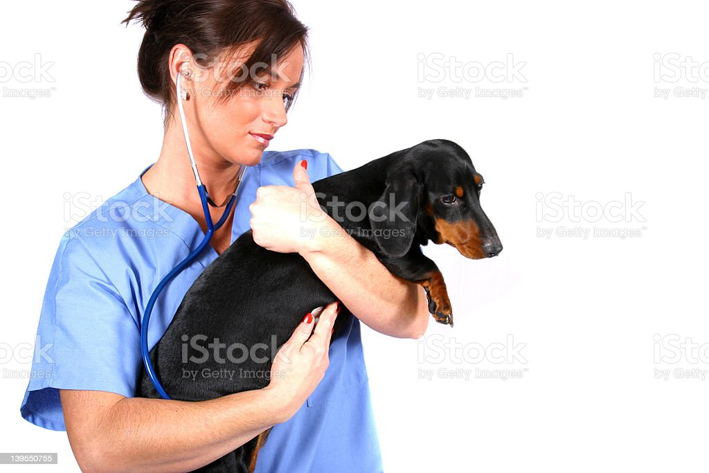 Vet and Dog royalty-free stock photo