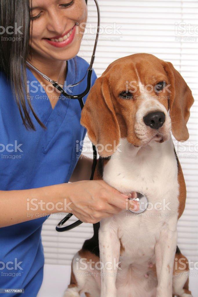 Vet and Dog royalty-free stock photo