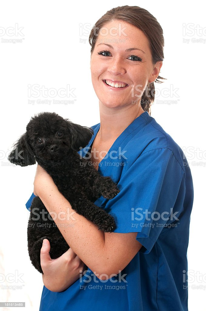 Vet Assistant Holding Pet Dog stock photo