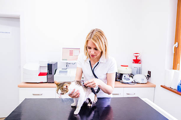 Vet checking a little sick cat with a stethoscope picture id615103682?b=1&k=6&m=615103682&s=612x612&w=0&h=fiapnoegkp9tlidzzyktu gcx2kwk 6w8 ozflfcswy=