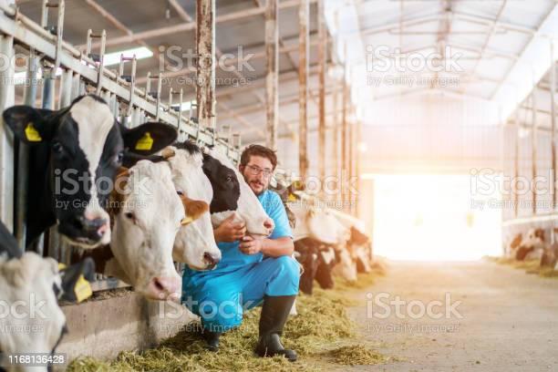 Vet checking cows into to barn picture id1168136428?b=1&k=6&m=1168136428&s=612x612&h=tmuvqerl k7p8zkhjygwof  0xy1dbj pwvzcuhypto=