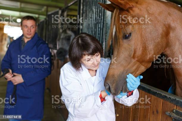 Vet checking horse at stable picture id1145074418?b=1&k=6&m=1145074418&s=612x612&h=kpydssrszigkx60knildvepxa5h33ur9zlwzztu4rxa=
