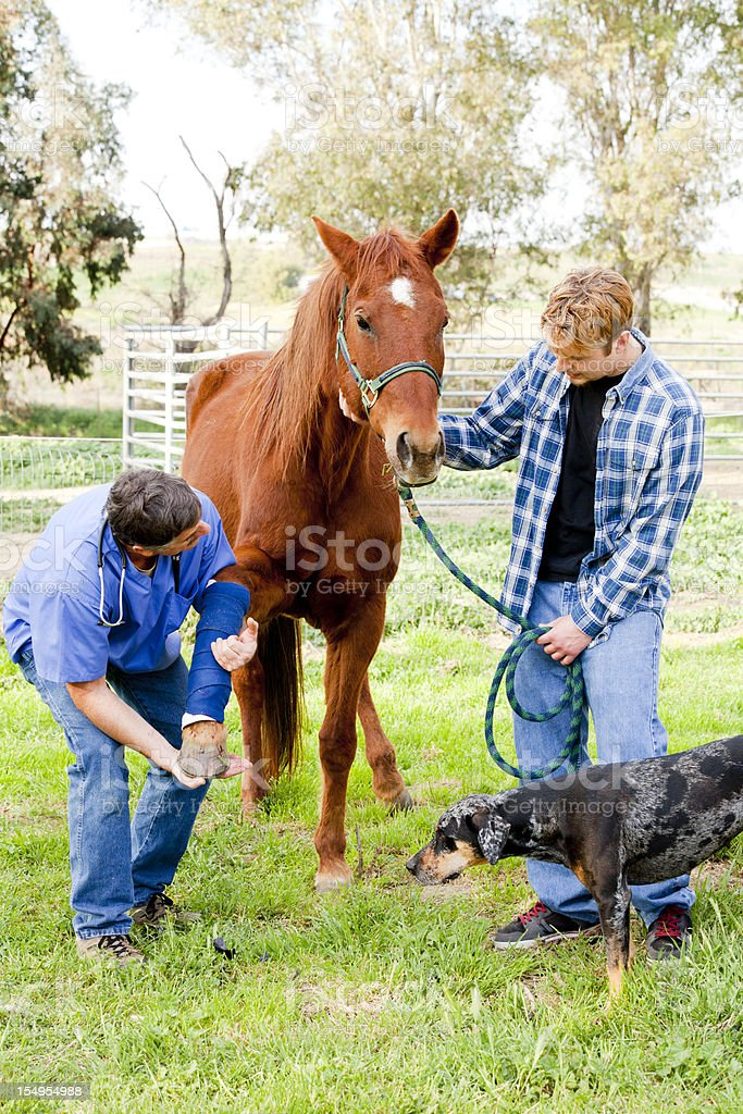 Vet checking horse's injured leg while owner watches stock photo