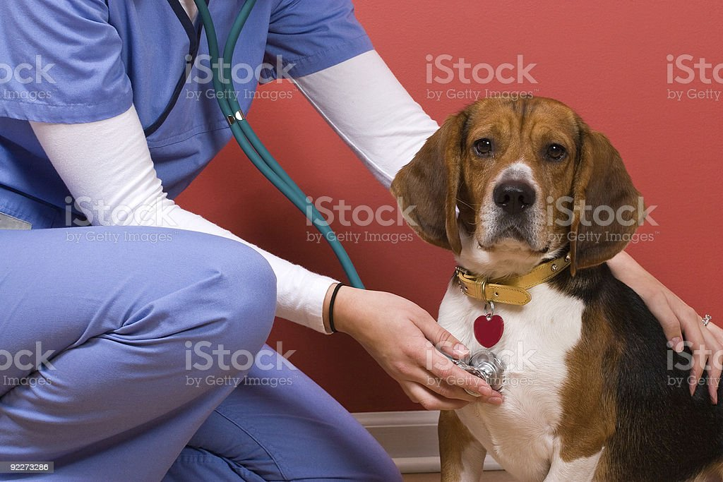 Vet Checkup stock photo