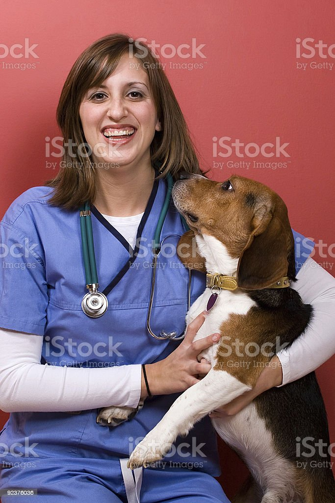 Tierarzt untersuchen lassen Lizenzfreies stock-foto