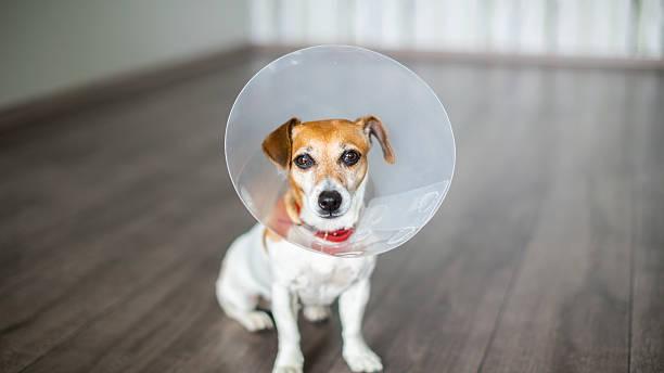 Vet Collar dog stock photo