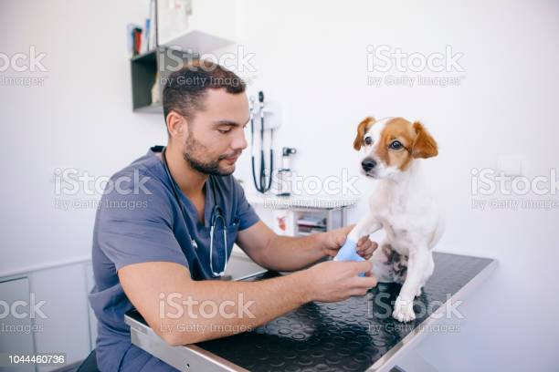 Vet doctor about ti cure a wounded dog picture id1044460736?b=1&k=6&m=1044460736&s=612x612&h=4e0leslyjwnr7cuxc xyty x5qjdv09ve2tqs4n2frg=