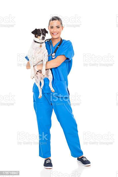 Vet doctor holding pet dog picture id178716947?b=1&k=6&m=178716947&s=612x612&h=yibecuyigl yqdierxcx5f6302a3zgxatotfd0hosvs=
