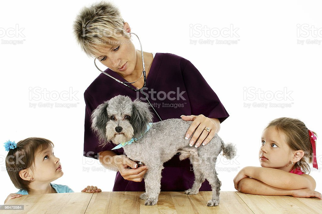 Vet, Dog And Children royalty-free stock photo