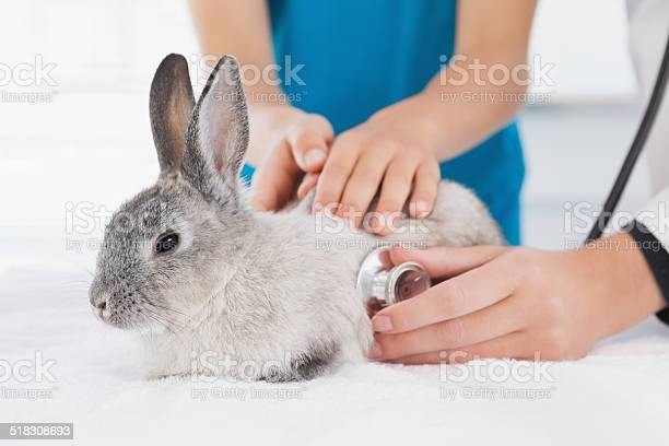 Vet examining a bunny with its owner picture id518308693?b=1&k=6&m=518308693&s=612x612&h=ymsdyks lmn5d0j4w exgo7uyilg ftpbzu6nwkzj6g=