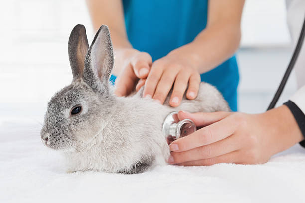 Vet examining a bunny with its owner picture id518308693?b=1&k=6&m=518308693&s=612x612&w=0&h=vb vweap w6gwdojhhwrmr0drjawupj0cvjqp0h ecs=