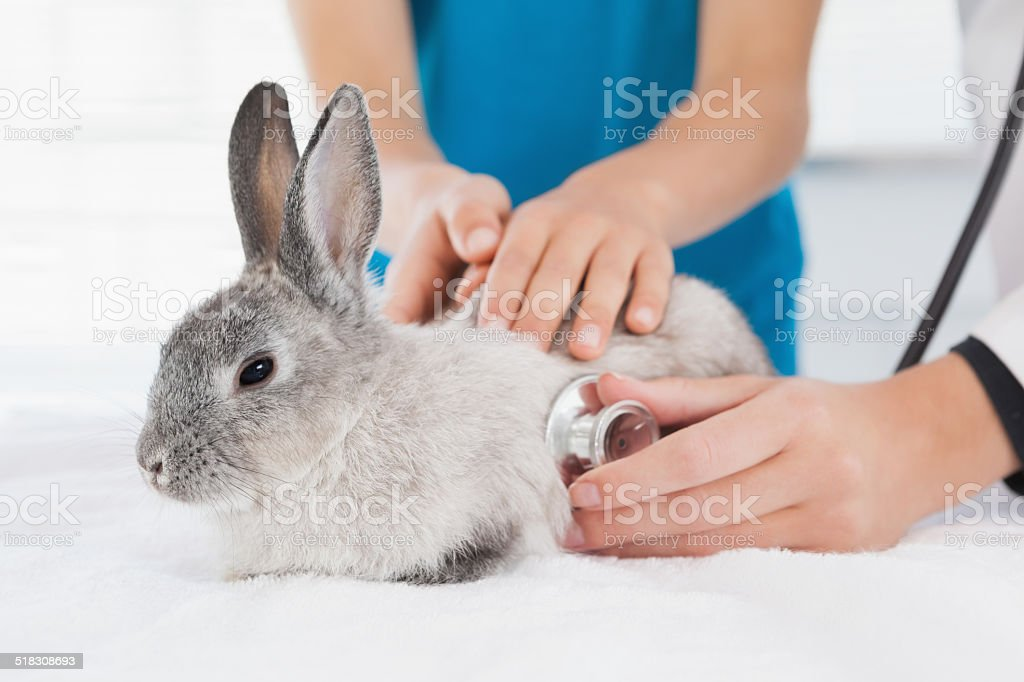 Vet examining a bunny with its owner stock photo