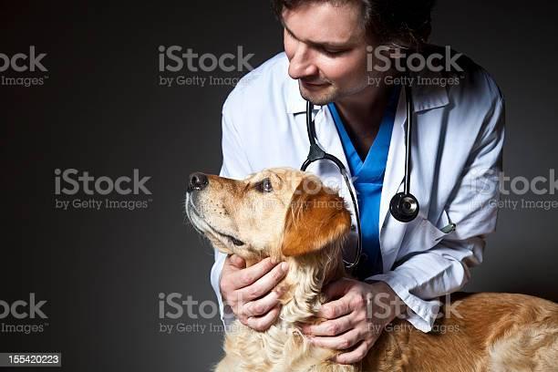 Vet examining a dog picture id155420223?b=1&k=6&m=155420223&s=612x612&h=u8pdpow5ycpyrbi7wv09eu n3gczby x1 vmzvegigg=