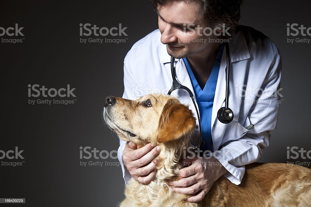 Vet examining a dog stock photo