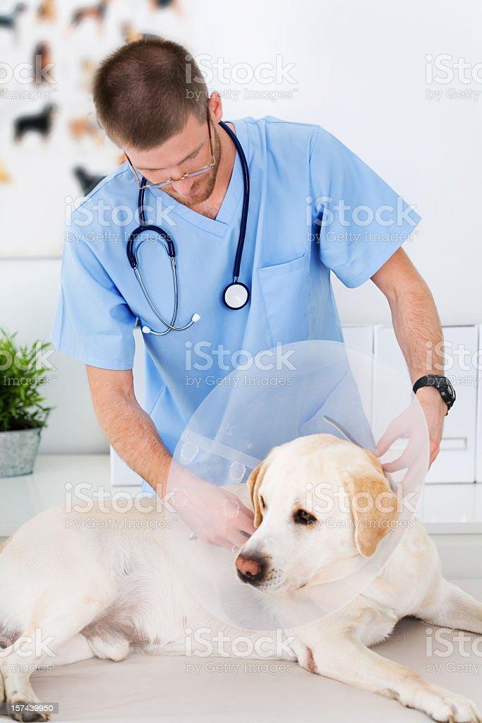 Vet Examining A Dog royalty-free stock photo